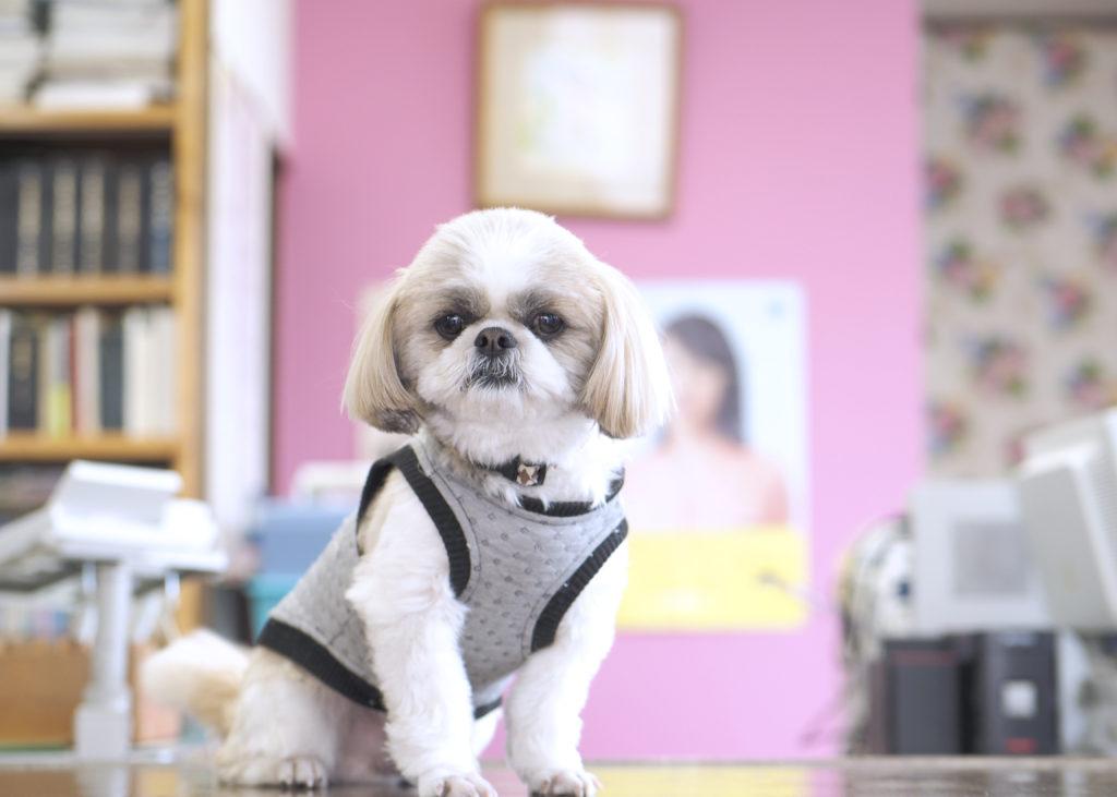 看板犬 : 埼玉県久喜市 司法書士ちく事務所  相続・遺言・贈与・売買・会社登記・成年後見・訴訟・調停など取り扱っています